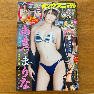 ハクセンシャ(白泉社)のヤングアニマル2020年no.20 あまつまりな あまつ様(漫画雑誌)