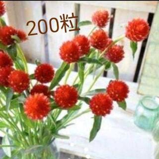 お花の種 ストロベリーフィールド 200粒(その他)