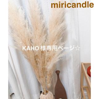 パンパスグラス KAHO 様専用ページ(ドライフラワー)