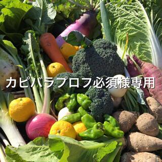 野菜BOX Lサイズ カピバラプロフ必須様専用(野菜)