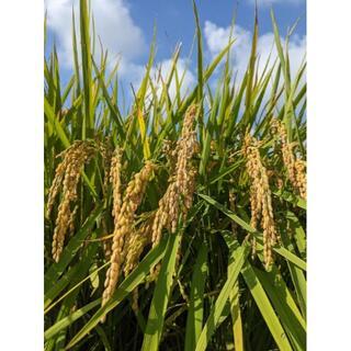 令和2年産米:福岡県のお米 4,5kg(ふくおかエコ農産物認証栽培作物)白米(米/穀物)