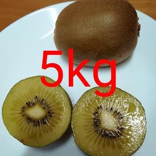 ゴールドキウイフルーツ 5kg(フルーツ)