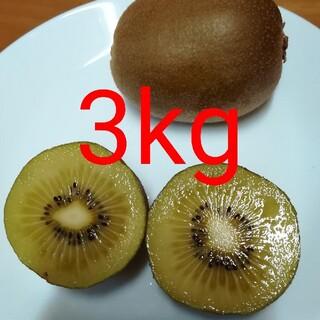 ゴールドキウイフルーツ 3kg(フルーツ)