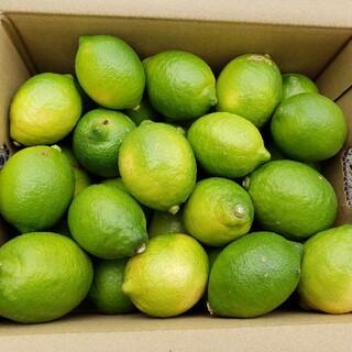 新鮮!!農家直送 国産レモン  3キロ箱(フルーツ)