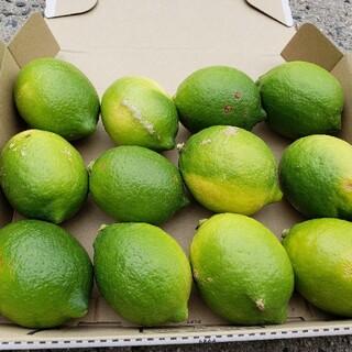 農家直送 新鮮国産レモン お試し1キロ(フルーツ)