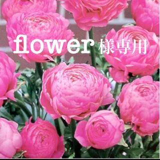 flower様専用 ラナンキュラス 球根 2球(その他)