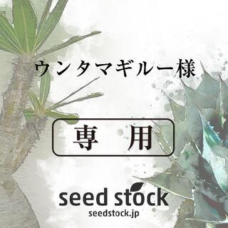 アガベの種 Agave sebastiana 20粒(その他)