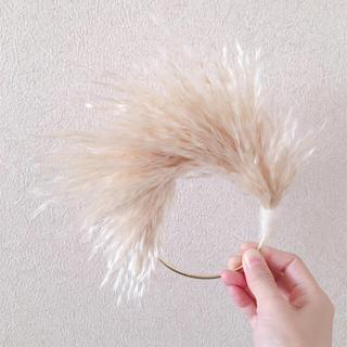 パンパスグラス mini  wreathe  2(ドライフラワー)