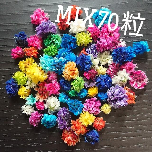 【無選別】かすみ草ドライフラワー70粒MIX ハンドメイドのフラワー/ガーデン(ドライフラワー)の商品写真