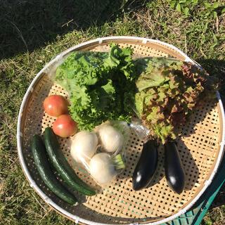 季節のお野菜(野菜)