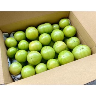 減農薬 桃太郎 グリーントマト 青トマト 約6kg 24個〜 はねだし 訳あり(野菜)