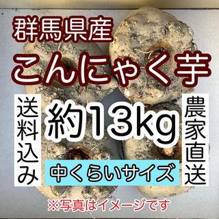 【群馬県産】こんにゃく芋 約13kg【中くらいサイズ】食用生玉  (野菜)