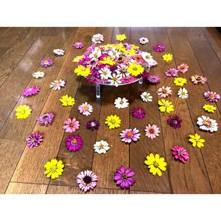 お花屋さんが作った秋色ジニアのドライフラワー山盛り50冠です‼️(各種パーツ)