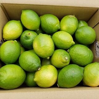 農家直送!新鮮国産レモン 3キロ箱(フルーツ)