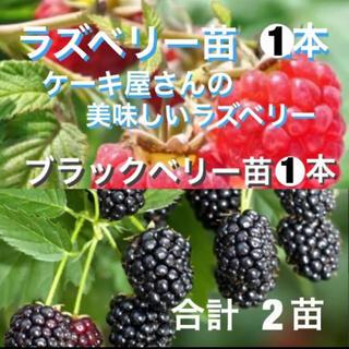 無農薬 ラズベリーの苗1本 と ブラックベリーの苗1本(その他)