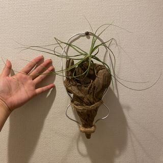 流木❤️インテリア❤️海❤️海外❤️キャラクター❤️プランツ❤️観葉植物(インテリア雑貨)