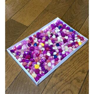 お花屋さんが作った小ちゃくて可愛い千日紅❣️    「ランダム200」(ドライフラワー)