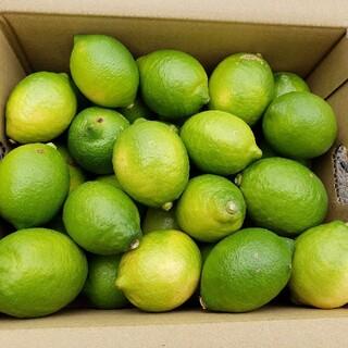 農家直送!! 国産レモン3キロ(フルーツ)