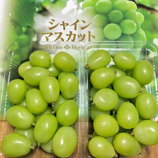 ◆岡山産 晴王◆シャインマスカット◆朝摘◆送料無料(フルーツ)
