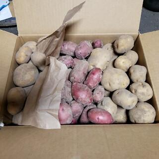 saru4444様 レッドムーン2kg キタアカリ3kg インカのめざめ5kg (野菜)