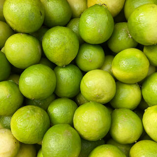 【希少国産ライム】訳ありタヒチライム2.5kg 完全無農薬!(フルーツ)