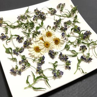 [お値下げ]小さなお花の花材 ネメシア ノースポール ナチュラル 素材  S-9(ドライフラワー)