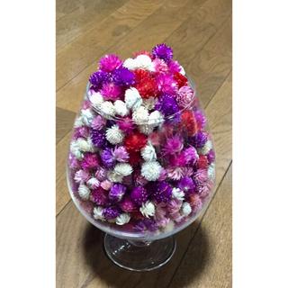 お花屋さんが作った秋色千日紅のドライフラワー山盛り150個➕おまけのです‼️(各種パーツ)