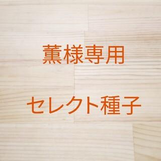 薫様専用 セレクト種子 10袋(野菜)