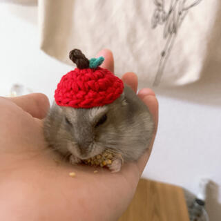 ハムスターの帽子【りんご】(おもちゃ/ペット小物)