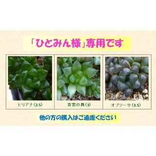 多肉植物 【0463】  まとめ買い「ハオルチア3種 & 多肉30種 セット」(その他)