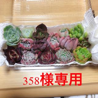 358様専用 韓国多肉植物寄せ植えセット15種(その他)