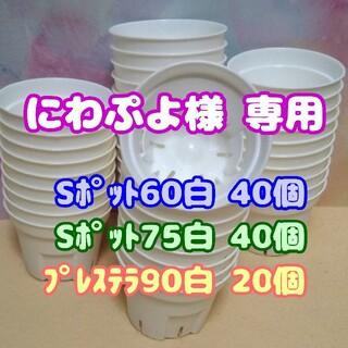 【スリット鉢】Sポット丸型60白40個 他 プレステラ 多肉植物(プランター)
