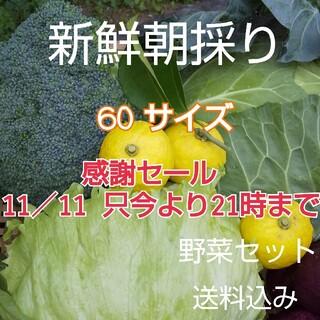 新鮮野菜【野菜箱詰め♪野菜BOX】 (野菜)