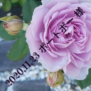 コンバース(CONVERSE)の21 22 23 ㎝【 CONVERSE ボーイズ靴下3足セット】黒/グレー(靴下/タイツ)