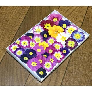 お花屋さんが作った可愛いプリムラのドライフラワー   ③(ドライフラワー)