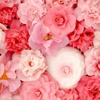エムズグレイシー(M'S GRACY)のM'S GRACY ベージュ×白 セレモニースーツ M(スーツ)