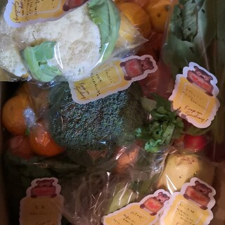 採れたて果物野菜セット(野菜)