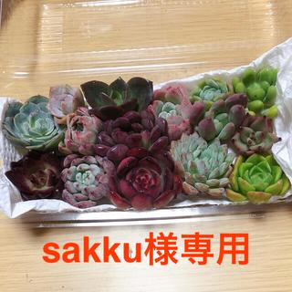sakku様専用 韓国多肉植物  寄せ植えセット15種(その他)