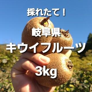 ③03 岐阜県産 無農薬 キウイフルーツ  3kg お得!(フルーツ)