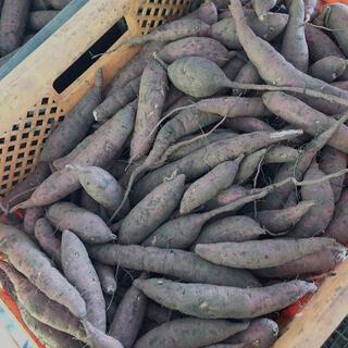 鹿児島県産 紅はるか 極小20キロ(野菜)