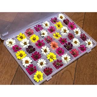 お花屋さんが作った可愛いドライフラワーのお詰め合わせ   ②(ドライフラワー)