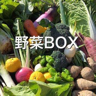 野菜BOX BIGサイズ(野菜)