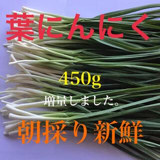 柔らかい「葉にんにく」450g(80〜90本)朝採り新鮮(増量しました。)(野菜)