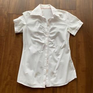 アベイル(Avail)のレディース ボタンダウンシャツ(シャツ/ブラウス(半袖/袖なし))