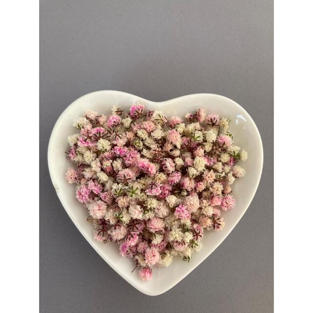 かすみ草 ドライフラワー 花材 ピンク ホワイト 白 ハンドメイドのフラワー/ガーデン(ドライフラワー)の商品写真