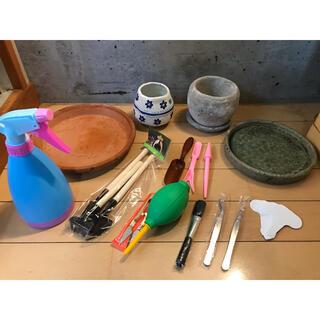 多肉植物お初めセットと植木鉢のお皿(その他)