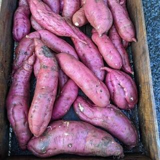 岡山県産  新鮮さつまいも  紅あずま  約7〜9㌔  無農薬栽培(野菜)