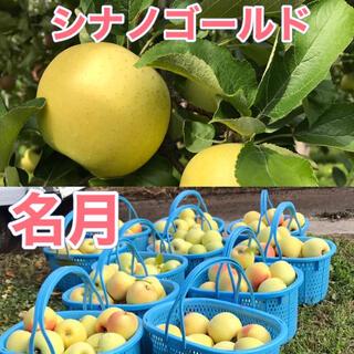 シナノゴールド  ぐんま名月 家庭用 合計10キロ 長野県産 減農薬(フルーツ)