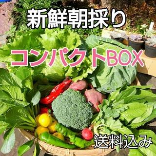新鮮朝採り【ビタミンたっぷり♪コンパクトBOX】畑から直送便♪農薬不使用(野菜)