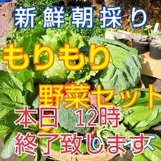 新鮮朝採り【もりもり野菜セット♪70サイズ5kg以内】(野菜)
